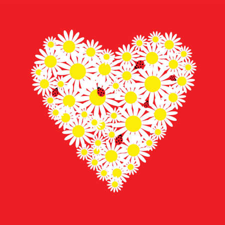 The heart of daisies with a ladybirds Vector