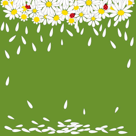 Daisies with ladybirds on a green background Vector
