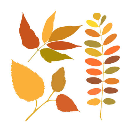 Set of a different branches of autumn Vector