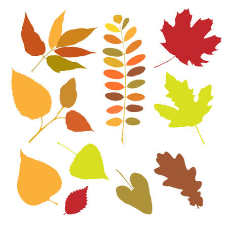 Set of a autumn leaves isolate Vector