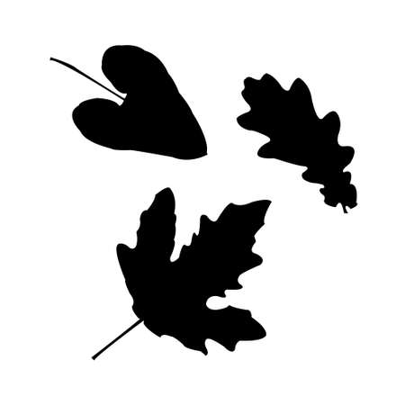 Set of a silhouettes of leaves Vector