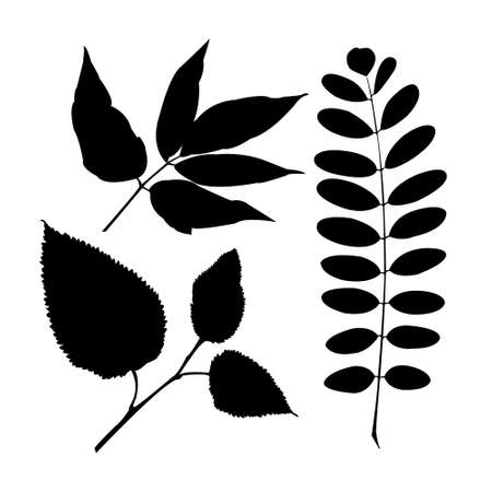 Set a realistic isolated plant leaves Vector