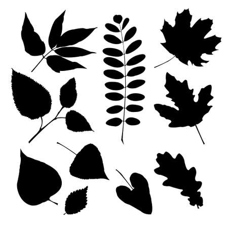 Set of silhouettes of a different leaves Vector