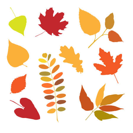 Seth a autumn leaves for design Vector