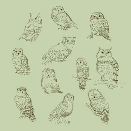 Collection of a cute cartoon of different owls