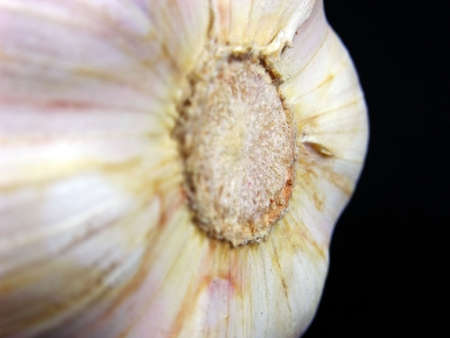 Food, spices, and close-up details of garlic photo
