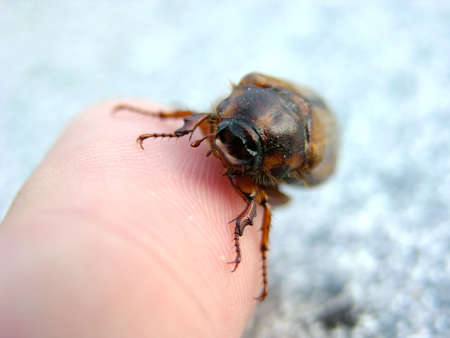 arthropoda: Animal pictures - portraits and details of animals