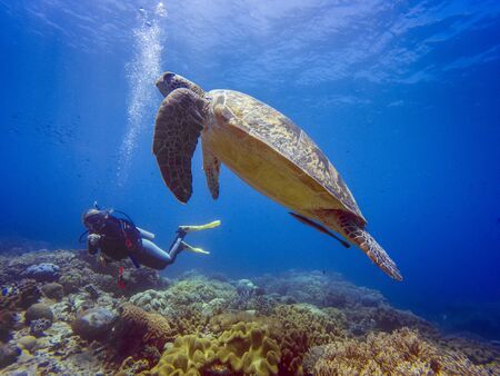 Scuba diver with a green turtle