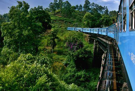 Train on a bridge above the trees