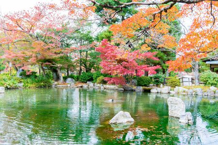 pond: Blurred - Colorful of autumn leaves with reflection in pond atMaruyama Park ,  Kyoto, Japan