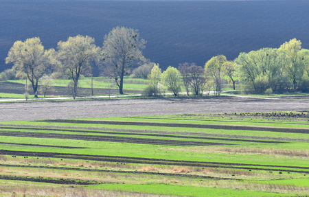 farmland, plowed field, spring, landscape,