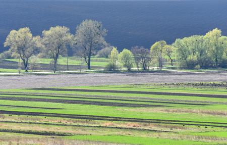 plowing: farmland, plowed field, spring, landscape,