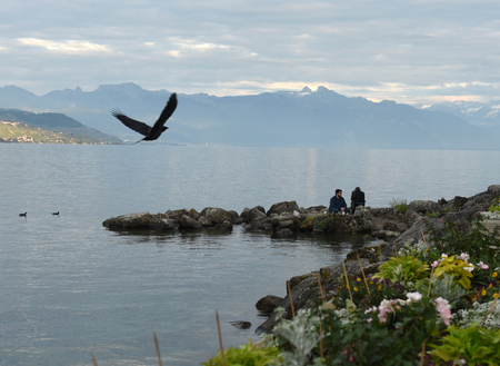 montreux: Lausanne, Switzerland - June 05, 2017: People at the embankment on Lake Geneva in Lausanne with mountains on the background. The crow flying over the Lake Geneva, Lausanne, Switzerland