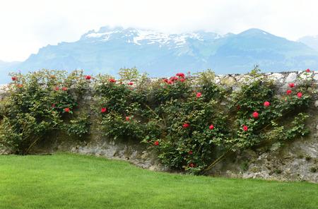 Vaduz, Liechtenstein, near Gutenberg Castle.