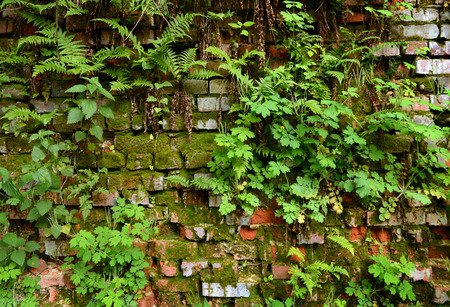 Wall overgrown, ancient brick wall, background, texture, old dilapidated brick wall overgrown with grass