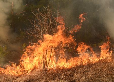 feu de forêt, feu de forêt, forêt en feu