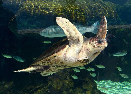 Sea turtle and fish in aquarium