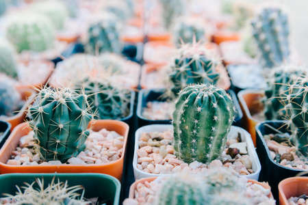 Cactus planted in pots -color effect 스톡 콘텐츠