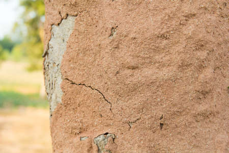 termites cover tree bark earth making termite mound.