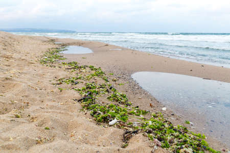 environmental issue: Environmental issue - muddied seashore ocean, natural mud and algae stick to the shore