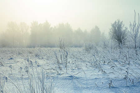 fog foggy: Gradient colorize snowy landscape with snow fog, foggy forest, field  and shrubs Stock Photo