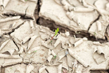 progressively: The Green sprouts among the dried and cracked earth