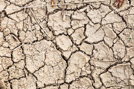 riverbed: The cracked dry earth, drought,  dry riverbed, disaster