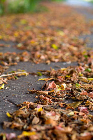 backgraound: autumn leaves on a city pavement, soft backgraound