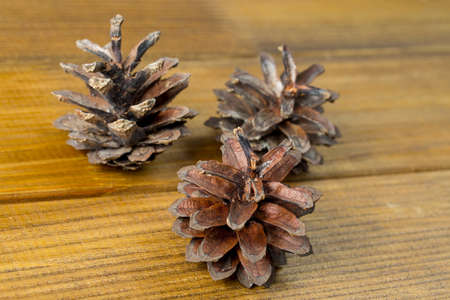 the Three fir cones on a brown wooden background, close-up