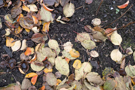 autumn leaves background. Fallen leaves in autumn on the asphalt. Texture. Background of autumn leaves