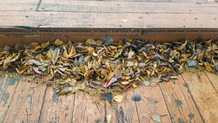 Autumn dead leaves on the old wooden floor