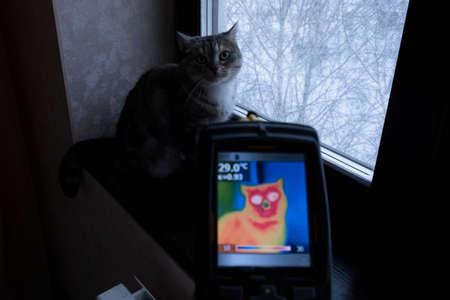Infrarot-Thermovisionsbild der Katze, die auf der Fensterbank sitzt. Standard-Bild