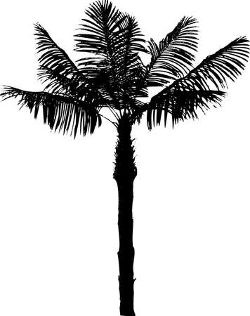 silhouette palm tree Vector