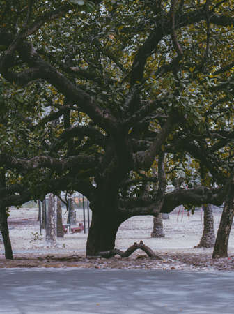 This is a Photograph of a cashew tree taken on a soft harmattan eve. Edited and modified to make it wallpaper-friendly.