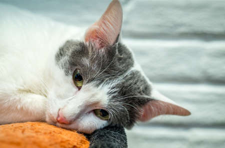 drowsy: Drowsy lonely cat