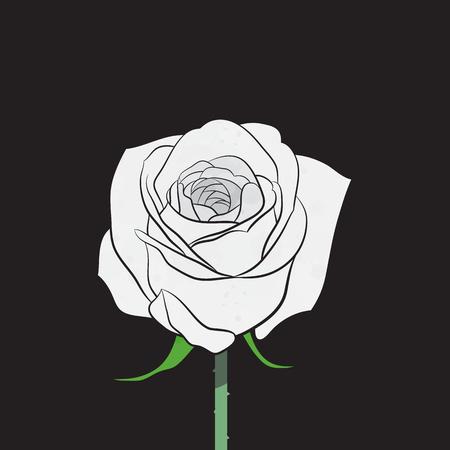 rose blanche: Rose blanche vecteur
