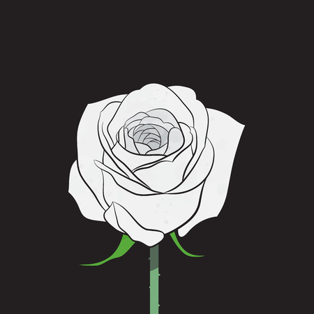 freshens: White rose vector
