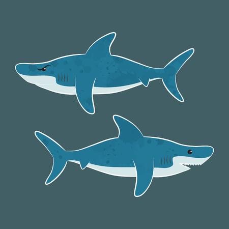 squalo bianco: White shark - Foto