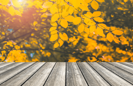 Wood table top and blurred autumn tree and leaf background - can used for display or montage your products.