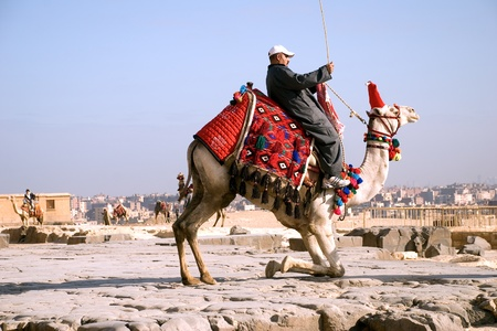 Arab (Bedouin) sitting on the tucking up camel against the background of Cairo. Egypt. Plateau Giza.