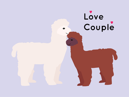 alpaca and llama couple love