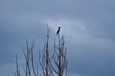 treetop: bird on the Treetop