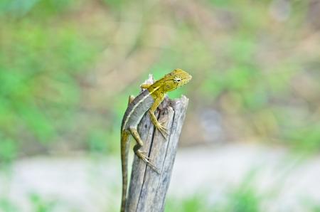 prin: árbol lagarto Foto de archivo