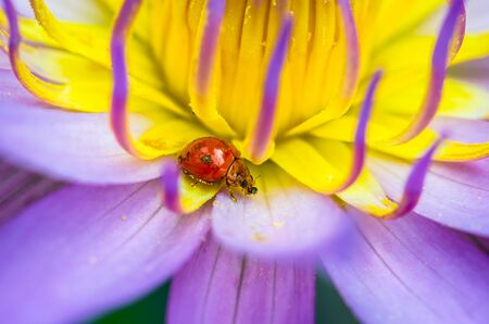 sepal: The water lily blooming with a ladybug