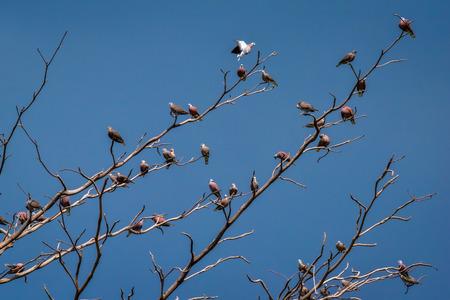 birds on branch: Birds perch on branches