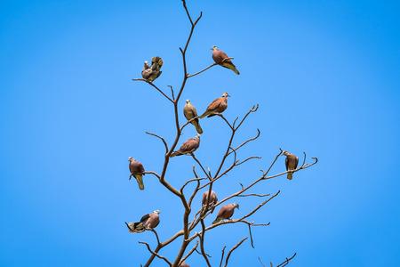 perch: Birds perch on branches