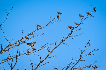 preen: Birds perch on branches