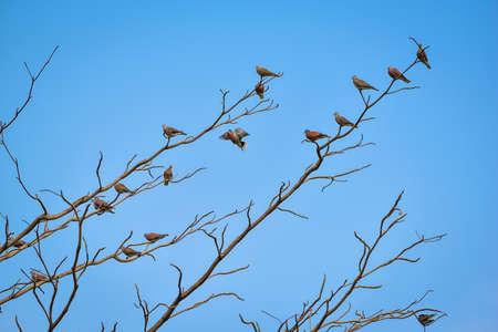 preen: Birds perch on the dry tree