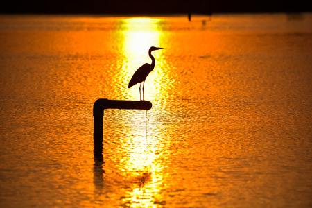 Silhouette of a bird perched on a piling with sunset lake background Stock Photo