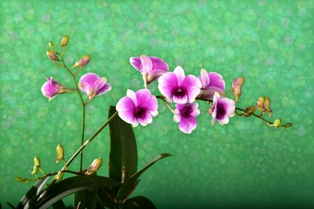 Orchid bouquet with a beautiful bokeh.blank space to put the text